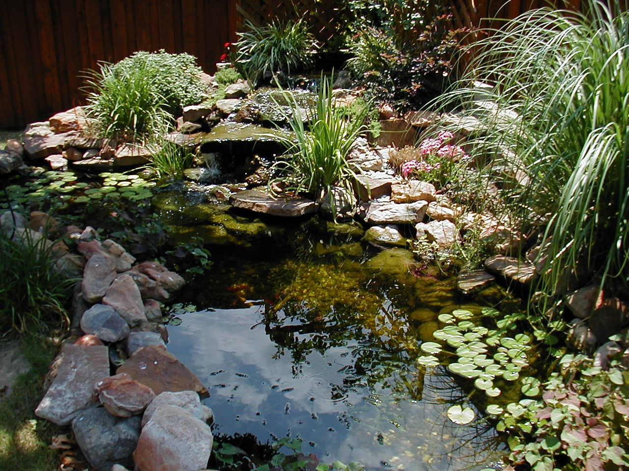 Rancho santa fe pond service pictures rancho santa fe for Pond landscape