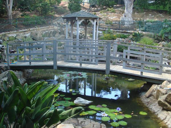 We provide professional pond service and assessment when evaluating problems so